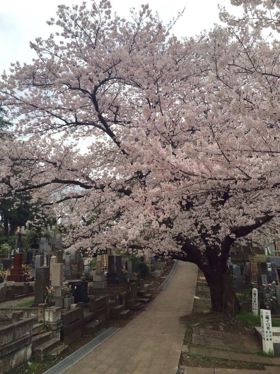 お墓参りの方法とお墓のおそうじ<1>